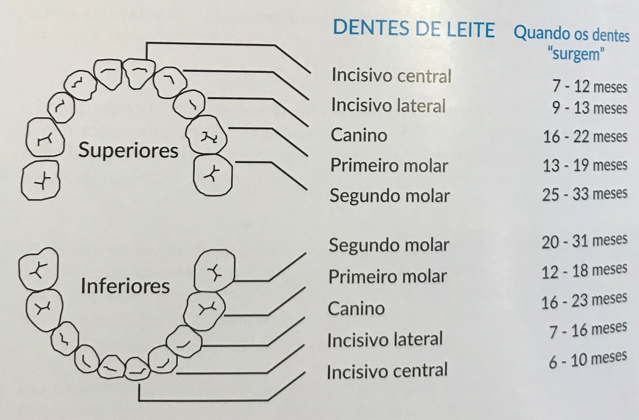 dentes (2)